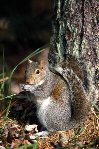 4 Key Tactics For Successful Squirrel Hunting