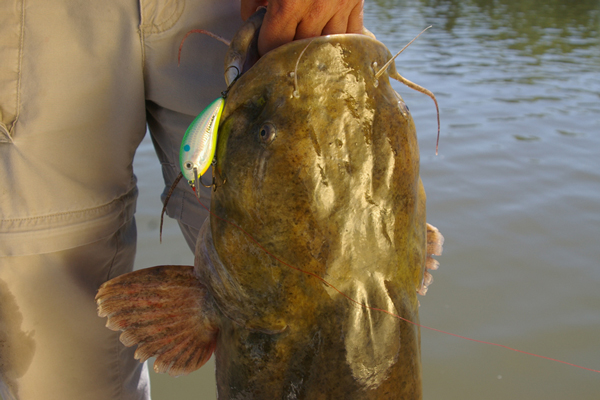 5 Ways To Catch Catfish on Lures