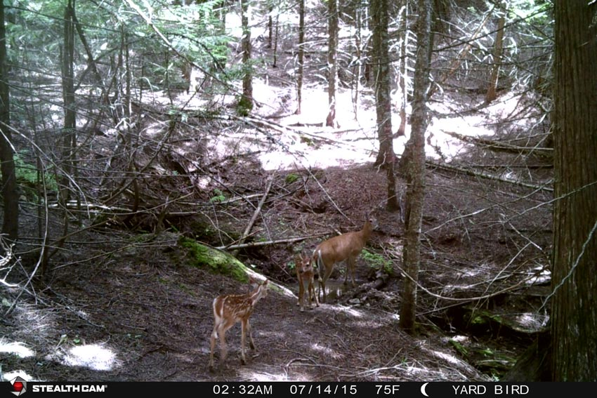 Everyone likes to discover bucks on their trail cameras. But in the days leading into the November rut camera sites revealing concentrations of does should be monitored closely, as these can quickly turn into big-buck hotspots.