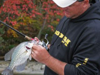 Fall_crappie