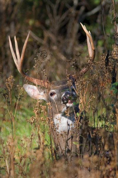 4 Proven Tactics for Early Season Deer Hunting Success