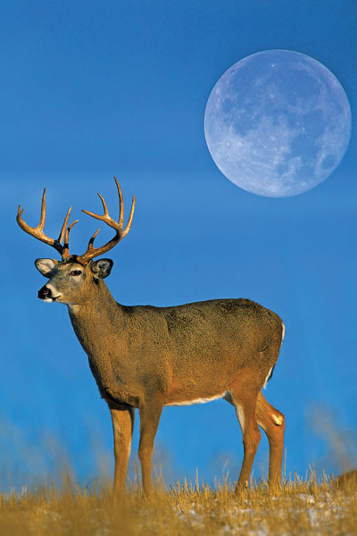 3 Reasons Deer Hunting All Day is Smart