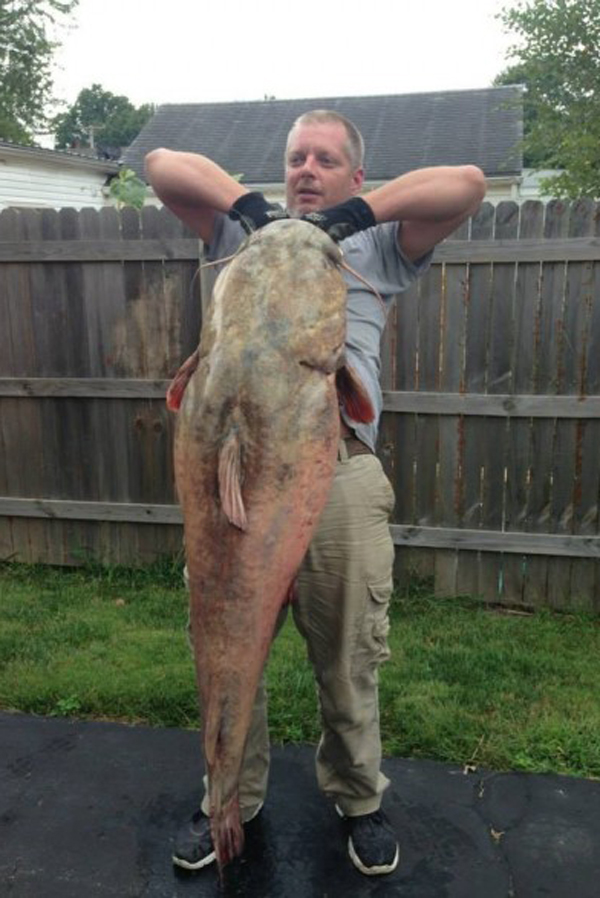 Angler Boats Potential Illinois State Record Catfish ...