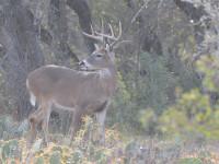 sw-gear-deer-zone-feature