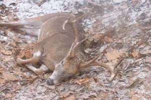 Rain, sleet and even snow in the Southeast can trigger a major increase in daytime deer activity. Hunting before, during and immediately following these changing weather conditions is a high-impact strategy that consistently produces results.