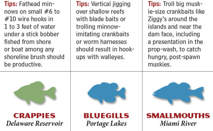 Ohio's waters include a Great Lake, inland lakes, small streams and big rivers. Not all fish in