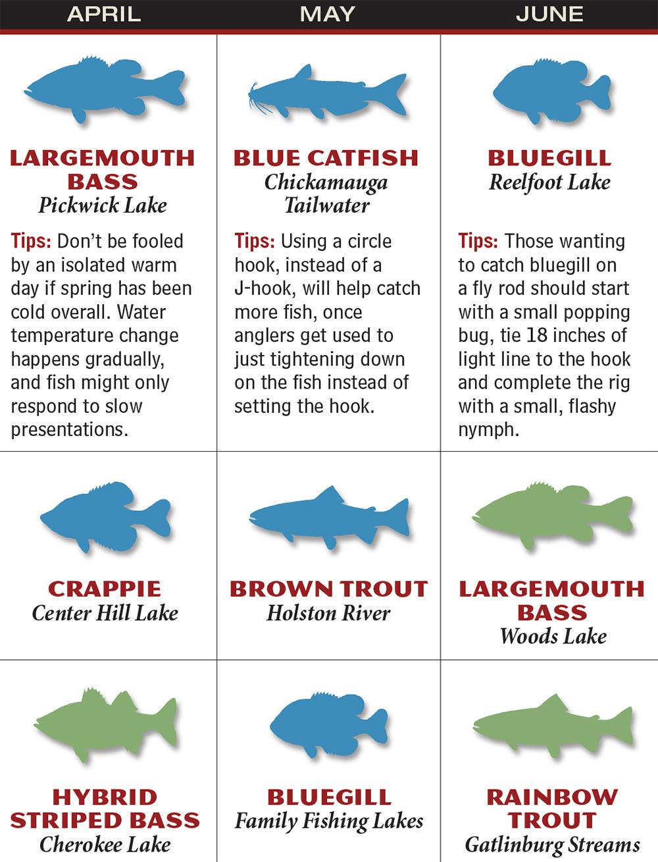 Tennessee 2016 Fishing Calendar