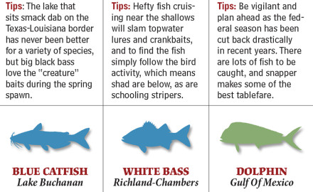 Texas' state waters harbor outstanding angling for more species than you can shake a rod at —
