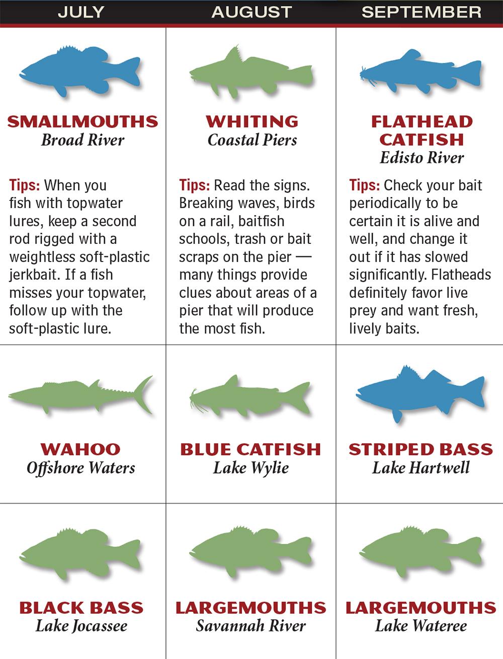 South carolina 2016 fishing calendar game fish for Fishing forecast calendar