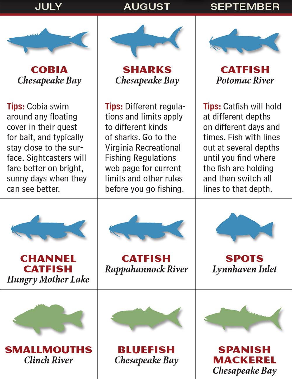 Freshwater fish maryland - Gafp_1602_021_va Jul_sep