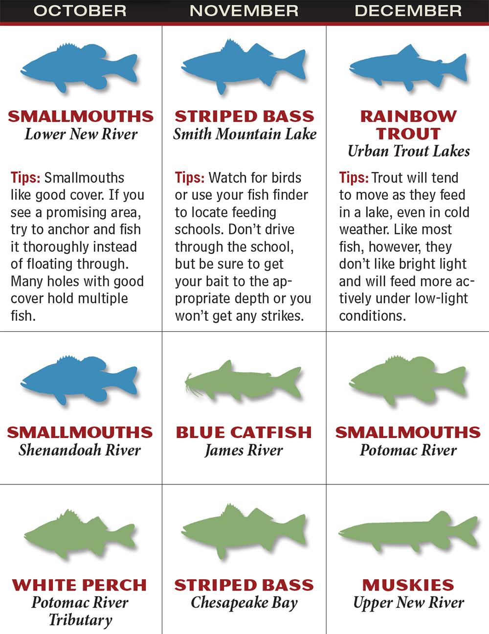 Freshwater fish maryland - Gafp_1602_021_va Oct_dec