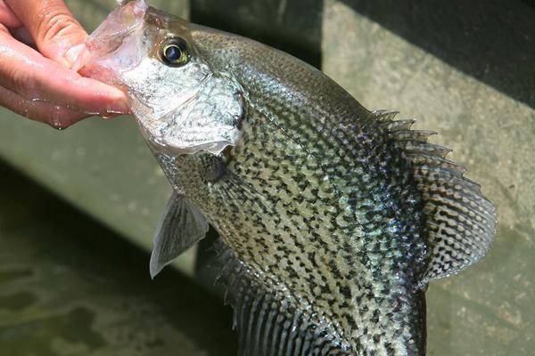 Kentucky_fishing