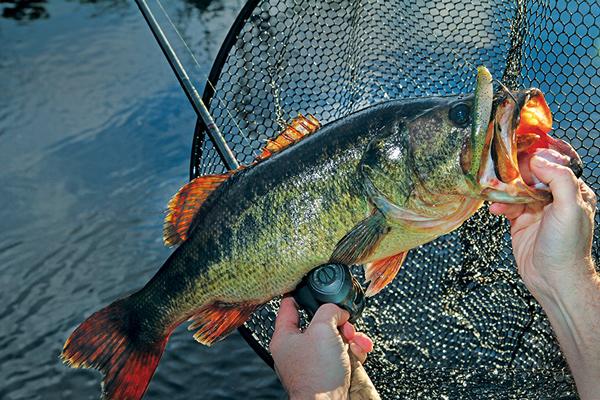 Louisiana_fishing