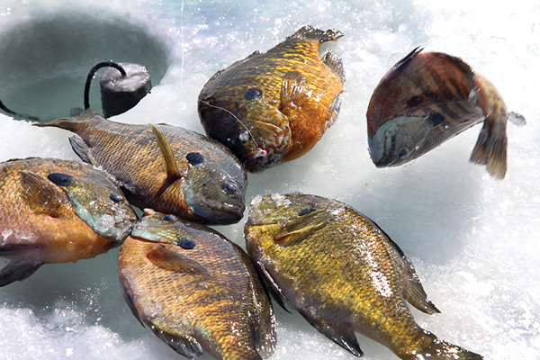 New England Fishing Forecast for 2016