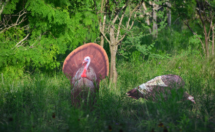 Jimmy Cordova of Floresville knows one sure sign of a good year for turkey hunting: Washed-out