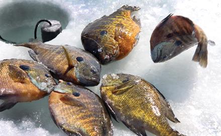 Panfishing_secrets