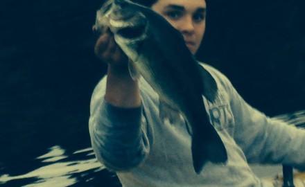 giant-bass
