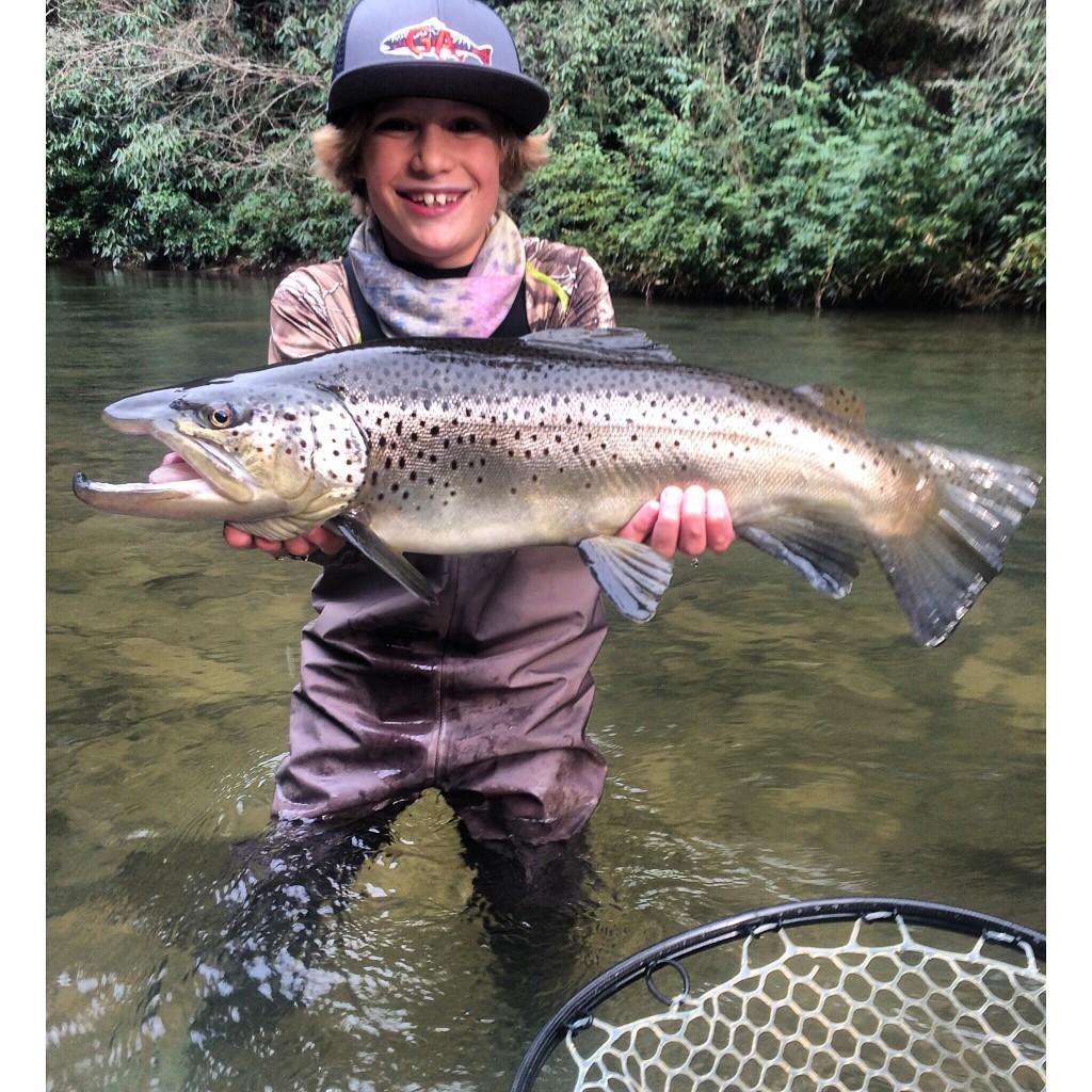 Big brown in georgia game fish for Georgia game and fish