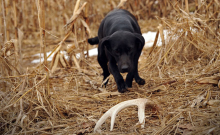 Deer-Dog-shed-hunting-essentials