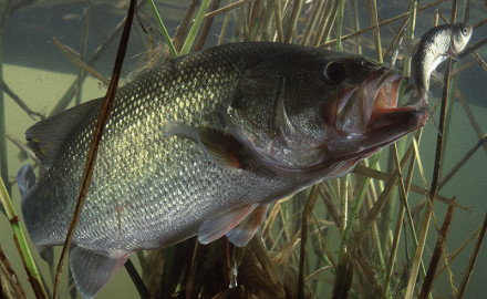 Hit these top locations for largemouths, spots and smallmouths.  Giant largemouth, smallmouth, and
