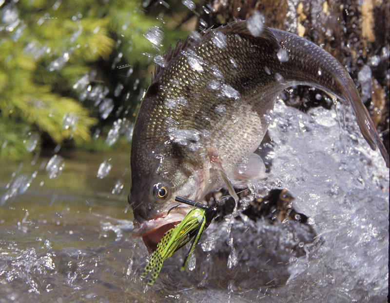 As winter rolls into spring, Georgia bass anglers get excited about another good year. But will it be a good year?