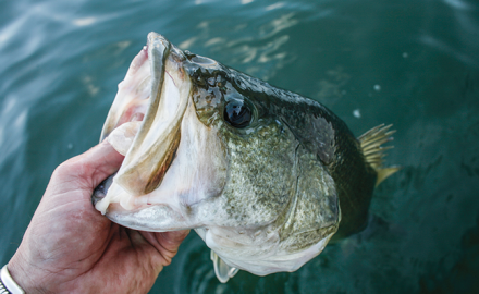 Bass Fishing, Bass Fishing in New York