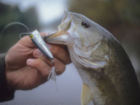 popper Ohio Bass Fishing, Bass Fishing in Ohio