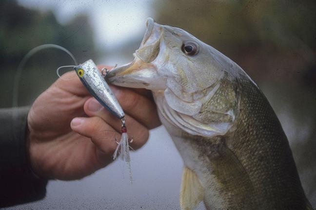 topwater bass