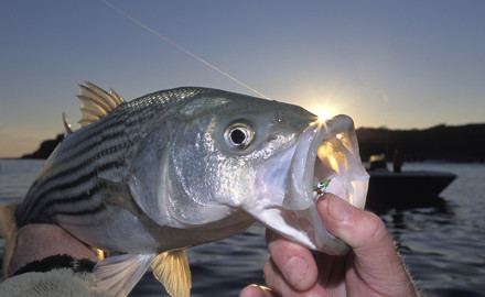 There's no shortage of great waters to ply for bass in our state, but these may be the top spots