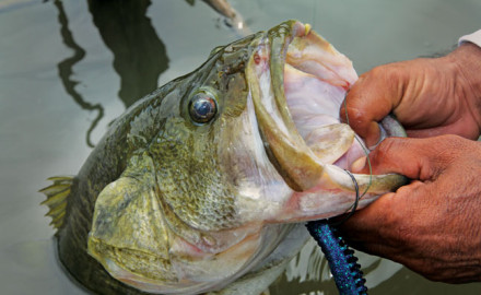 Sometimes if you want to catch the biggest summertime bass you'll need to think deep.