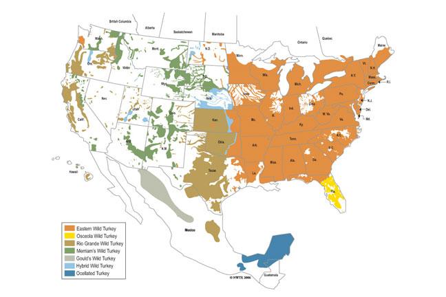 Map of wild turkey range