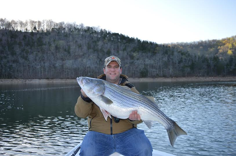 Early spring norris lake striper game fish for Norris lake fishing
