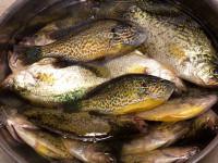 North_Carolina_Family_Fishing_Destinations_2016