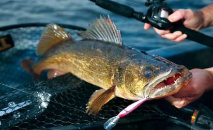 Post-spawn Walleye fishing tips