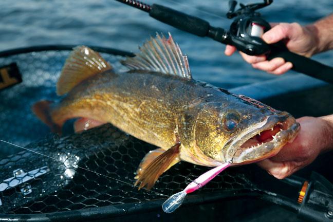 Post-Spawn Walleye Fishing Advice