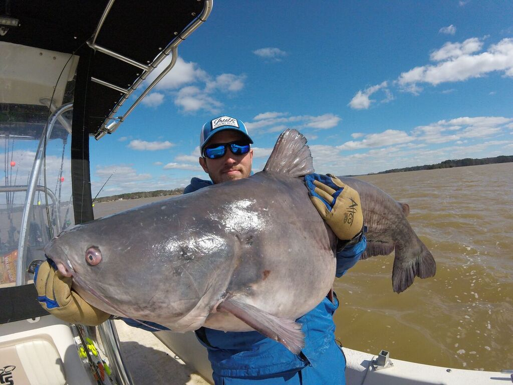 10 Big Blue Catfish You Should Know - Game & Fish