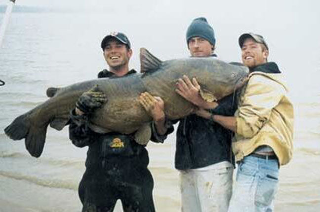 Cody Mullenixon Blue Catfish Record