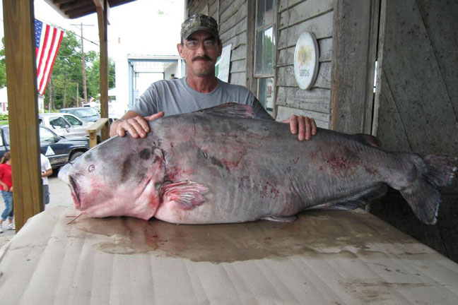 Greg Bernal Blue Catfish Record