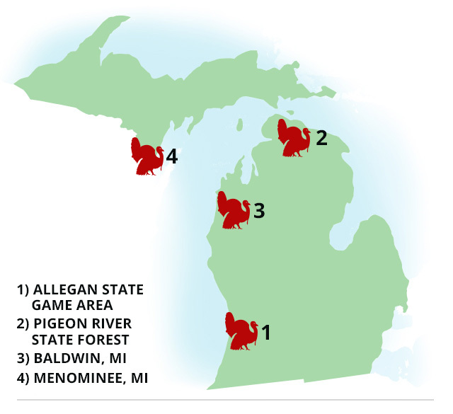 Michigan: 4 Best Places To Turkey Hunt Right Now - Game & Fish