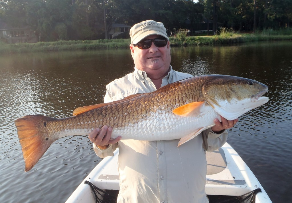 Hilton head red game fish for Red fish hilton head