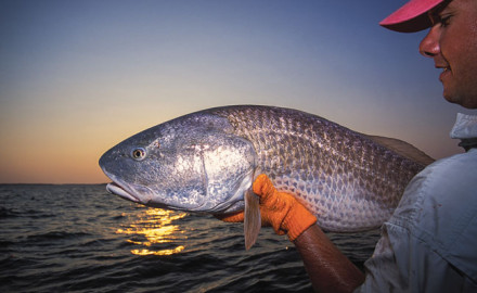 Redfish tactics