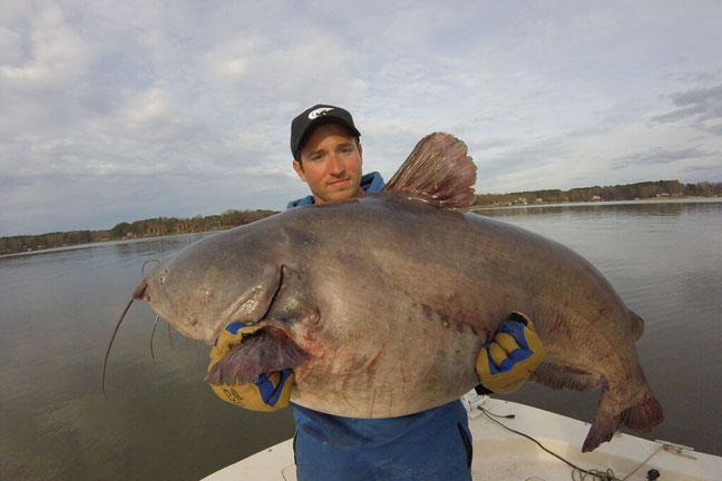 Giant Blue Catfish caught by Zakk Royce