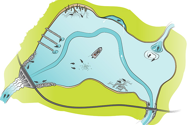 Catfish Location Illustration
