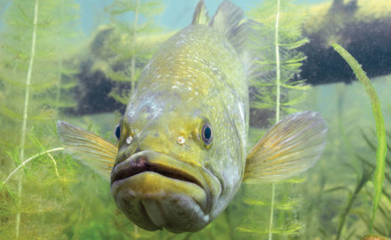 Expert-Tips-for-Summertime-Bass-Fishing