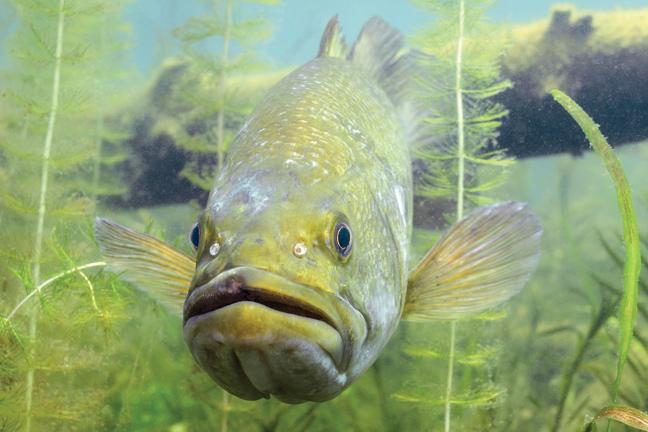 Expert Bass Fishing Advice for Summer