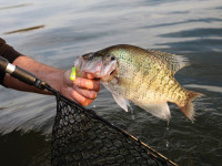 Jigging-for-Summer-Crappie