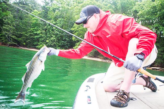 Striper fishing heart racing topwater tactics game fish for Striper fishing tips