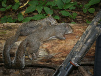 Tips for Spring Squirrel Hunting