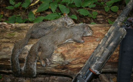 Squirrel hunting is the most popular small game pursuit in the nation and one of the most popular
