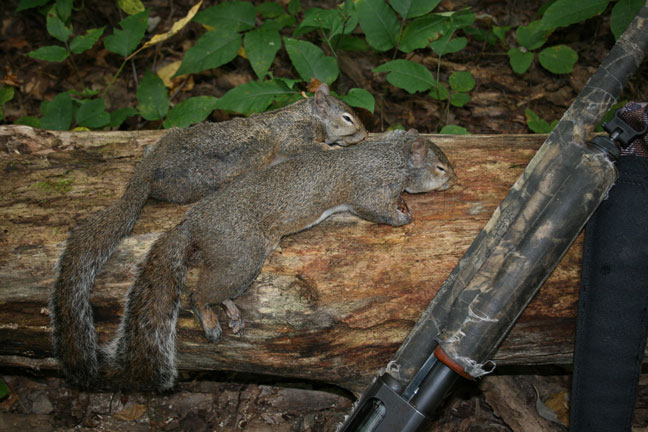 10 Tips for Successful Spring Squirrel Hunting